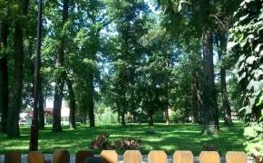 Fotografie La Pădurea Verde - 3