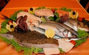Tasty Fish - 0